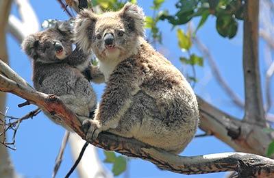Tasmanië Veerboten